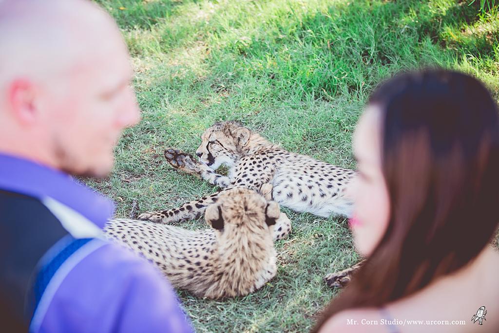 南非婚禮_1454